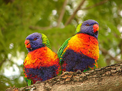 Lovebirds photo by http:/ /www.flickr.com/photos/aussiegall/